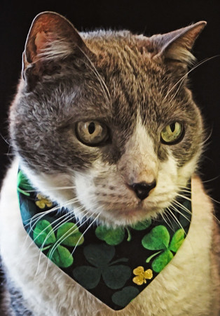 Shamrock Kitty