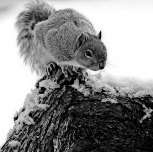 Squirrel and Snow