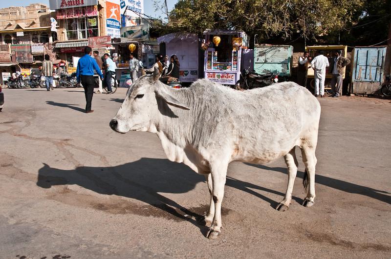 POW Day 5-_DSC3299- Jaisalmer