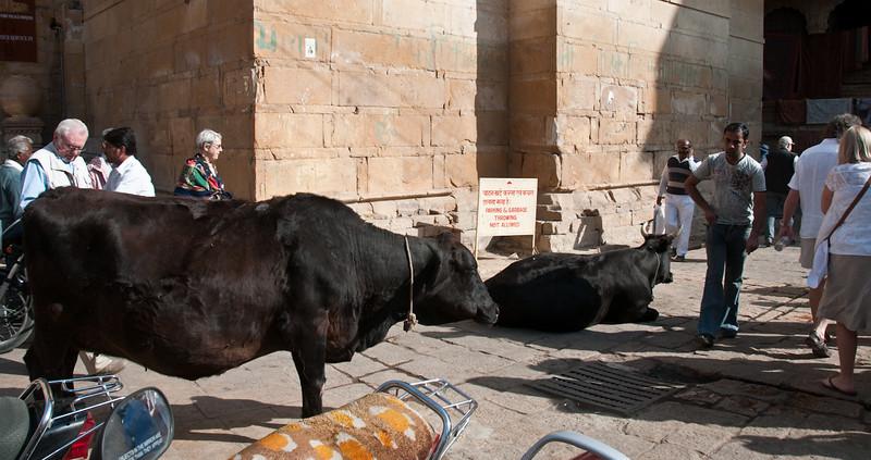 POW Day 5-_DSC3385- Jaisalmer