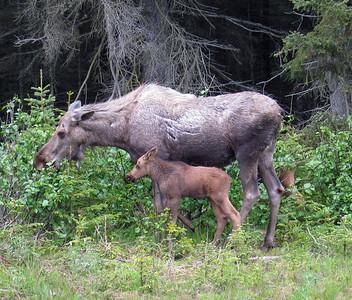 Homer Alaska Photos - Videos 3