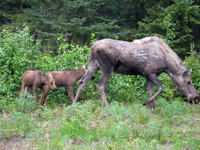 Homer Alaska Photos - Videos 4