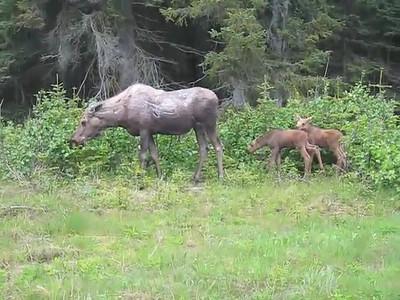 Homer Alaska Photos and Videos 7B