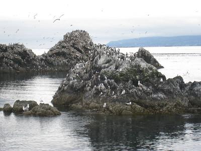 Homer to Seldovia Alaska Photos 6