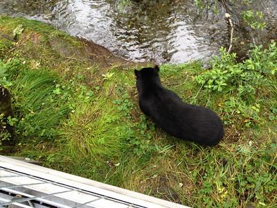 Alaska Cruise 2012  018