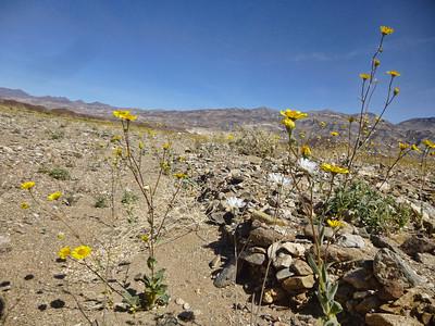 Death Valley Trip  16