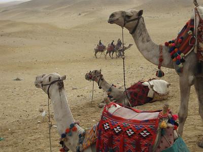 Egypt_Dec2008_018