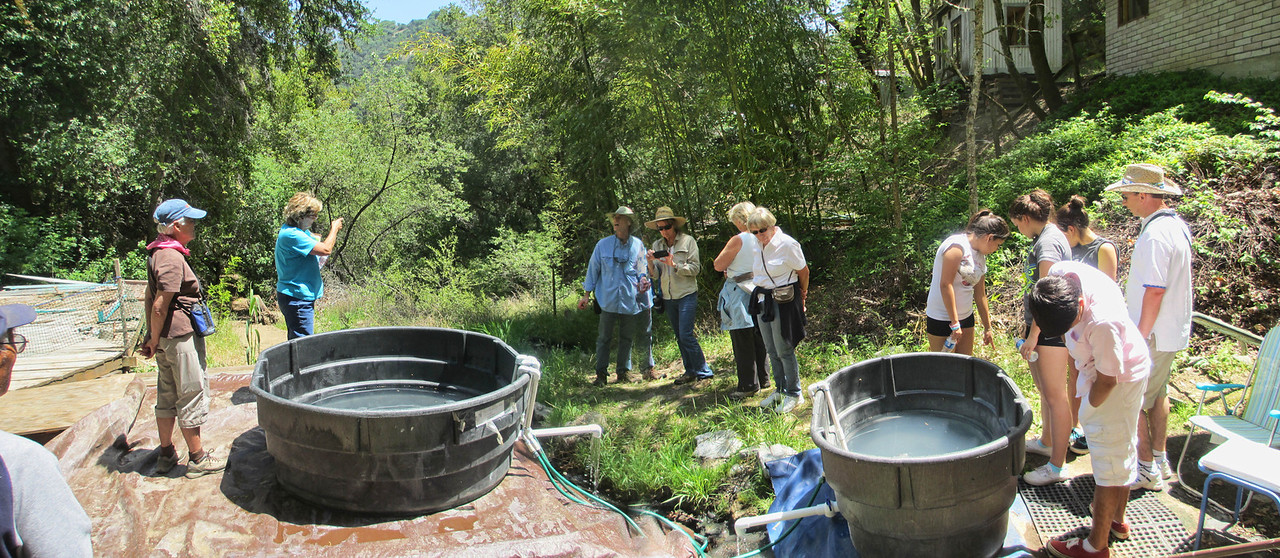Gilroy Hot Springs 5-4-2012 025