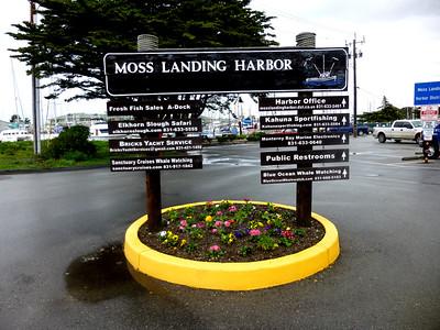 Moss Landing 3:5:16  1