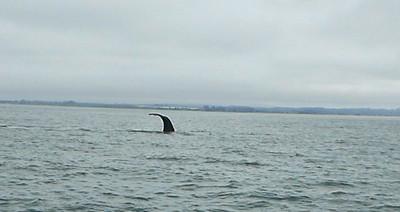 Moss Landing Whales 5