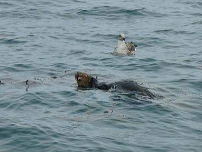 Moss Landing Whales 3