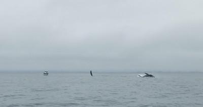 Moss Landing Whales 10
