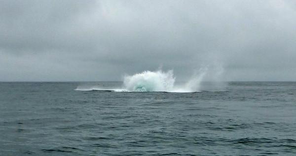 Moss Landing Whales 17
