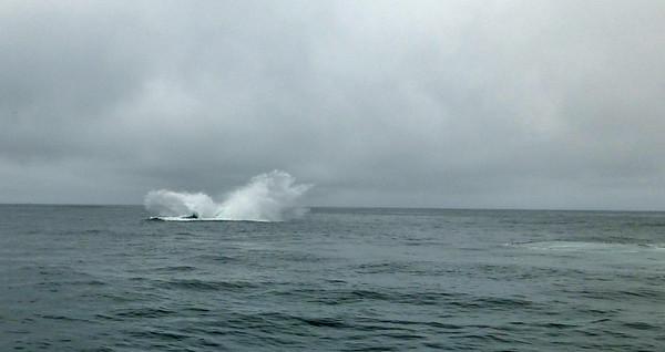 Moss Landing Whales 16