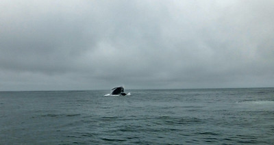 Moss Landing Whales 14