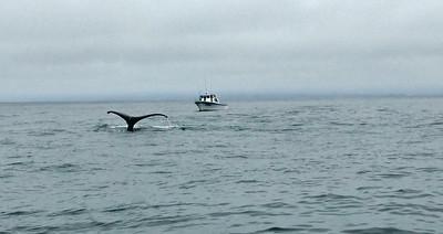 Moss Landing Whales 13