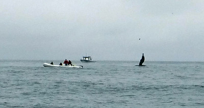 Moss Landing Whales 7