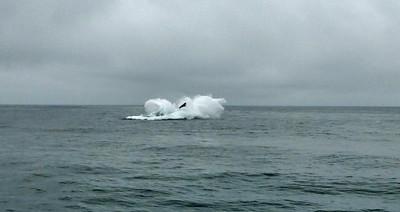 Moss Landing Whales 15