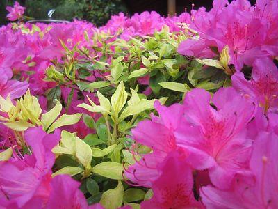 Portland Tour Gardens Friends 34