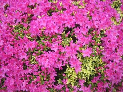 Portland Tour Gardens Friends 38