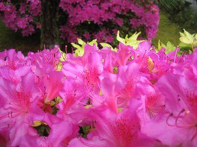 Portland Tour Gardens Friends 36