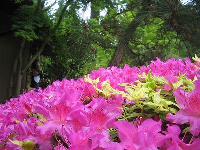 Portland Tour Gardens Friends 37