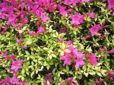 Portland Tour Gardens Friends 35