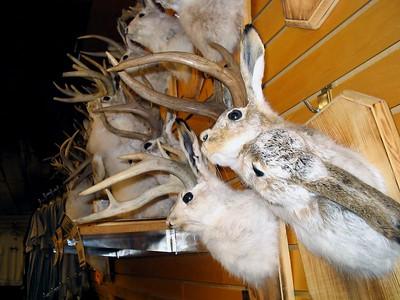 South Dakota 20032