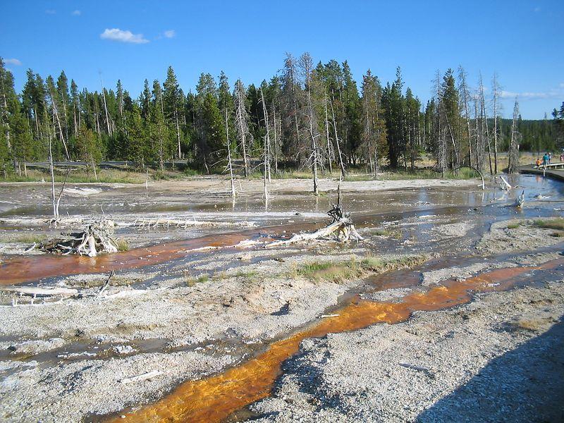 Yellowstones's Best035