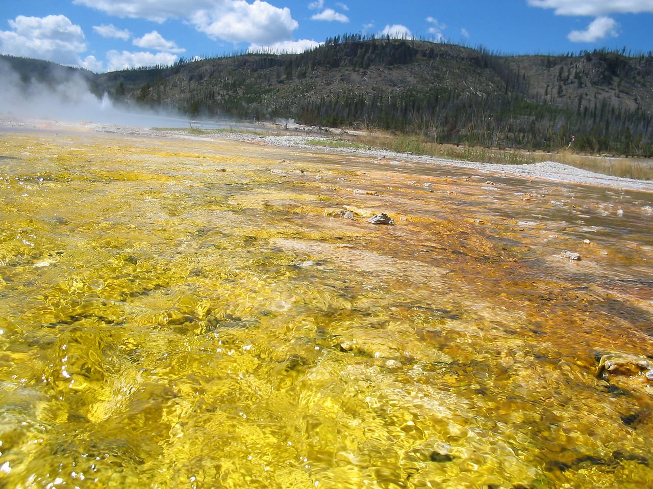 Yellowstones's Best078
