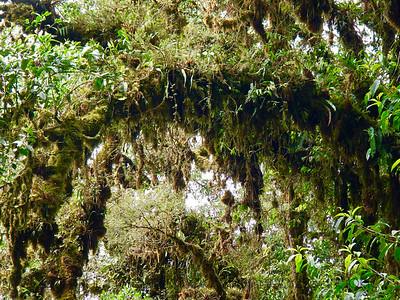 Arboreal Bryosphere