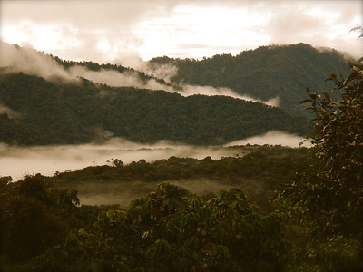 Cloud Forest Vista