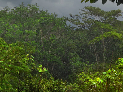 Afternoon Jungle Rain
