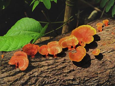 Fungi Gallery