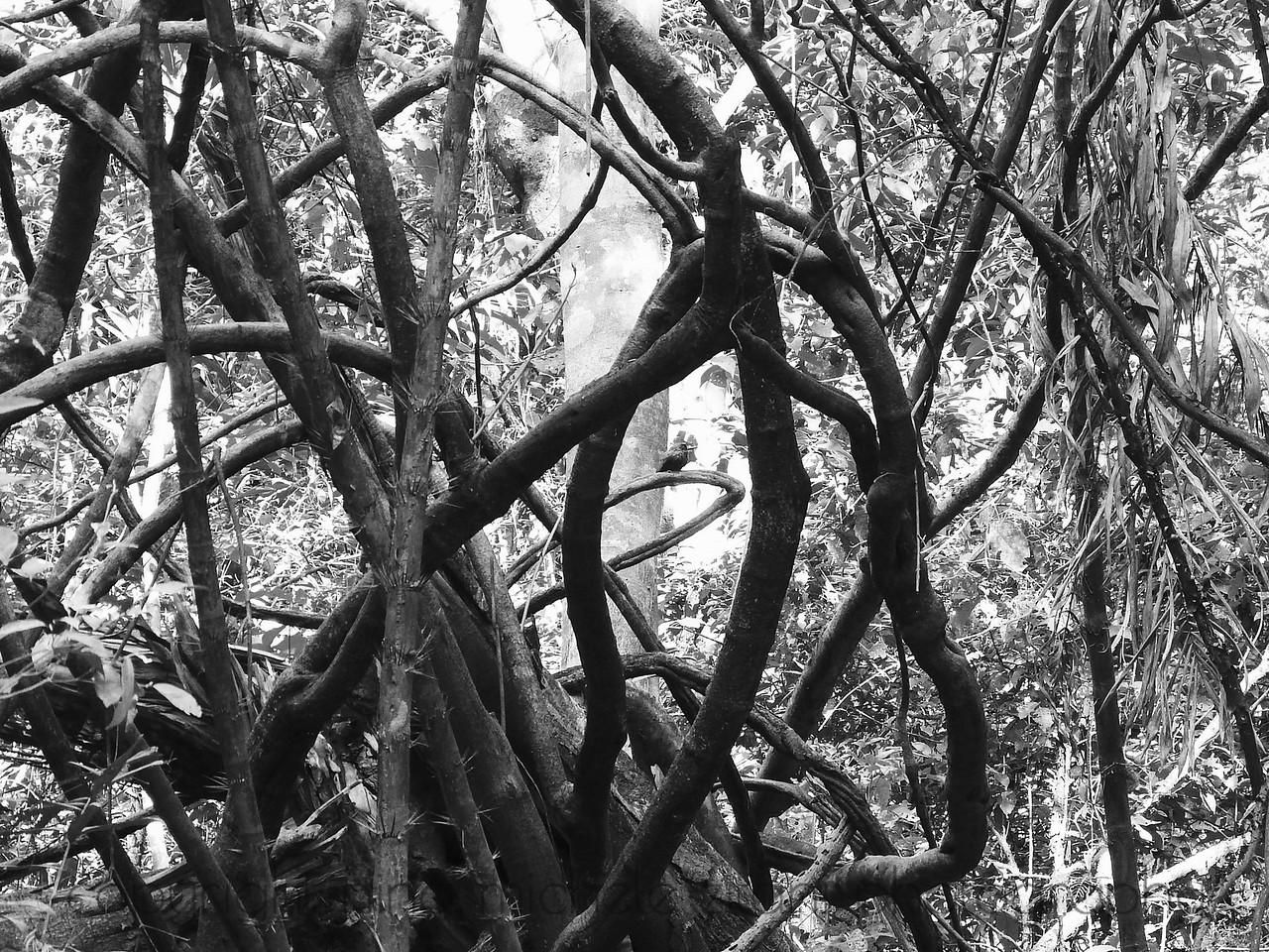 Tangled Vegetation of Seasonally Flooded Forest