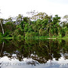 Amazon Reflection