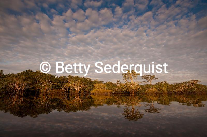 Sunrise Reflections, Amazon