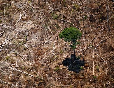 Aerial view of the Amazon rain forest. (Australfoto/Ivan Canabrava)