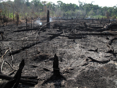 A smouldering patch of forest near Caapiranga, in the Brazilian state of Amazonas, Nov. 5, 2010. The low river levels broke the previous drought record which was set only 5 years ago, a frequency which environmental groups say are a direct result of deforestation and global warming. The dryness facilitates unintentional and intentional forest fires, like this one. (Australfoto/Douglas Engle)