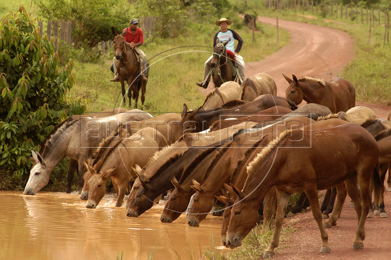 "Cowboys drive horses through the ""Terra do Meio"" or Middle Lands, in the municipality of Sao Felix do Xingu in Brazil's Amazonian state of Para. Named for the area between the Xingu and Iriri Rivers, the 29,343 sq. mile area (slightly smaller than Maine or Scotland) lies in the path of progress as cattle ranches encroach from the east and big business soy advances from the south. illegal logging, labor, land-grabbing and human rights abuses in the area are not uncommon. Simple people, looking for opportunity to have some cheap land, are migrating to the reagion. Much Like the favelas of Rio de Janeiro, which were not officially included on city maps until the mid-1990s, the Middle Land is also a species of autonomous zone - a black hole of information and uncertainty over which Brazilian authorities in reality have little control. (AustralFoto/Douglas Engle)"