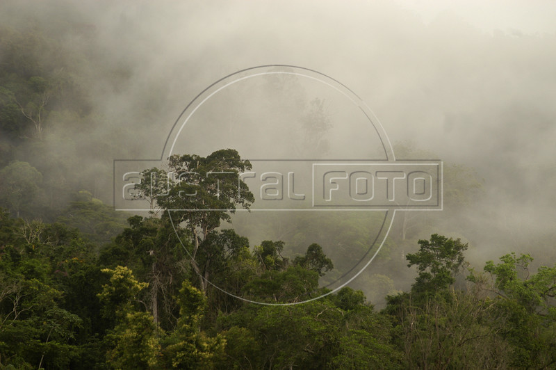 """A view of the forest in the """"Terra do Meio"""" or Middle Lands, in the municipality of Sao Felix do Xingu in Brazil's Amazonian state of Para. Named for the area between the Xingu and Iriri Rivers, the 29,343 sq. mile area (slightly smaller than Maine or Scotland) lies in the path of progress as cattle ranches encroach from the east and big business soy advances from the south. illegal logging, labor, land-grabbing and human rights abuses in the area are not uncommon. Simple people, looking for opportunity to have some cheap land, are migrating to the reagion. Much Like the favelas of Rio de Janeiro, which were not officially included on city maps until the mid-1990s, the Middle Land is also a species of autonomous zone - a black hole of information and uncertainty over which Brazilian authorities in reality have little control. (AustralFoto/Douglas Engle)"""