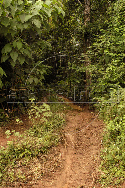"""A view of a logging path leading into the forest in the """"Terra do Meio"""" or Middle Lands, in the municipality of Sao Felix do Xingu in Brazil's Amazonian state of Para. Named for the area between the Xingu and Iriri Rivers, the 29,343 sq. mile area (slightly smaller than Maine or Scotland) lies in the path of progress as cattle ranches encroach from the east and big business soy advances from the south. illegal logging, labor, land-grabbing and human rights abuses in the area are not uncommon. Simple people, looking for opportunity to have some cheap land, are migrating to the reagion. Much Like the favelas of Rio de Janeiro, which were not officially included on city maps until the mid-1990s, the Middle Land is also a species of autonomous zone - a black hole of information and uncertainty over which Brazilian authorities in reality have little control. (AustralFoto/Douglas Engle)"""