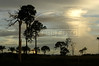 """A few remaining trees of a ranch are silloueted at dusk in the """"Terra do Meio"""" or Middle Lands, in the municipality of Sao Felix do Xingu in Brazil's Amazonian state of Para. Named for the area between the Xingu and Iriri Rivers, the 29,343 sq. mile area (slightly smaller than Maine or Scotland) lies in the path of progress as cattle ranches encroach from the east and big business soy advances from the south. illegal logging, labor, land-grabbing and human rights abuses in the area are not uncommon. Simple people, looking for opportunity to have some cheap land, are migrating to the reagion. Much Like the favelas of Rio de Janeiro, which were not officially included on city maps until the mid-1990s, the Middle Land is also a species of autonomous zone - a black hole of information and uncertainty over which Brazilian authorities in reality have little control. (AustralFoto/Douglas Engle)"""