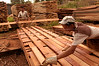 Cesar Rodrigues, 16, moves freshly cut wood planks at a saw mill in Brazil's western state of Rondonia, Oct. 27, 2004. About one-fifth of the state, which borders Bolivia, has been deforested since intensive settlement began in the 1970s. The main highway was paved in the 1960s, and as any satellite map can show, there is a direct link of road construction and forest destruction. As roads improve, migration increases and forest is cleared to make way got ranches and towns. A majority of its citizens now live in urban areas. It is a main exporter of wood, as well as a significant producer of both coffee and and as a result of deforestation, cattle is important. (Australfoto/Douglas Engle)