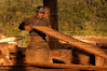 Backdropped by forest, a workers cuts logs into planks at a saw mill in Brazil's western state of Rondonia, Oct. 28, 2004. About one-fifth of the state, which borders Bolivia, has been deforested since intensive settlement began in the 1970s. The main highway was paved in the 1960s, and as any satellite map can show, there is a direct link of road construction and forest destruction. As roads improve, migration increases and forest is cleared to make way got ranches and towns. A majority of its citizens now live in urban areas. It is a main exporter of wood, as well as a significant producer of both coffee and and as a result of deforestation, cattle is important.(Australfoto/Douglas Engle)