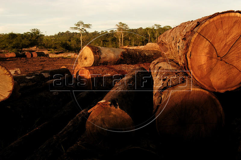 Logs near the Amazon forest will be cut into planks at a saw mill in Brazil's western state of Rondonia, Oct. 28, 2004. About one-fifth of the state, which borders Bolivia, has been deforested since intensive settlement began in the 1970s. The main highway was paved in the 1960s, and as any satellite map can show, there is a direct link of road construction and forest destruction. As roads improve, migration increases and forest is cleared to make way got ranches and towns. A majority of its citizens now live in urban areas. It is a main exporter of wood, as well as a significant producer of both coffee and and as a result of deforestation, cattle is important.(Australfoto/Douglas Engle)