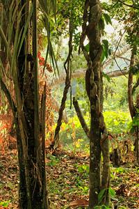 Στην Περουβιανή Αμαζονία (ΠΕΡΟΥ). Το Τροπικό Δάσος του Αμαζονίου