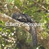 Saki Monkey, Amazon