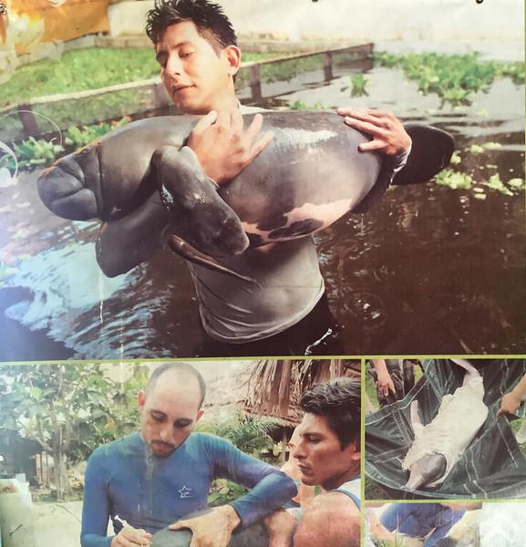 Manatee rescue centre, Iquitos, Peru