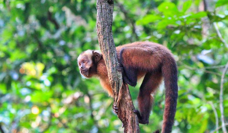 """Στην Περουβιανή Αμαζονία (ΠΕΡΟΥ). Στο """"Νησί των Πιθήκων"""""""